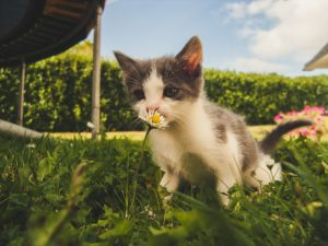 cat thinking about eating a flower