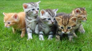 young litter of kittens