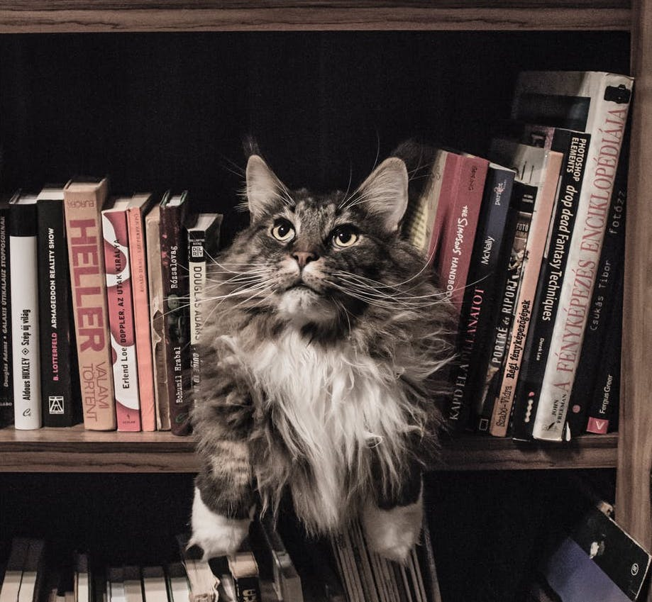 cat sitting amongst fact books
